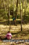 reforestacion MVC 2015