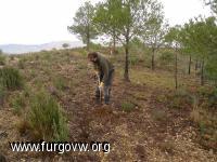 VII Reforestacion